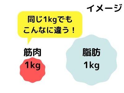 筋肉と脂肪